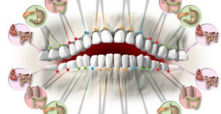 Les dents reflètent votre santé